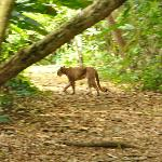 Puma on trail between ranger station and hotel!!