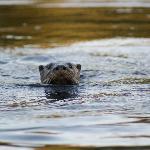 Curious beavers are playing around