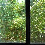 The view from our window: Shoulder to shoulder bamboo trees, daring the sun to enter
