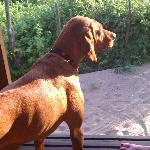 our dog Lena looking out of our casita at the lizards