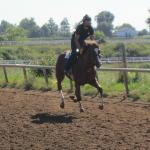 one of the horses in training at full gallop