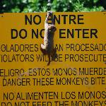 Baby Monkey Playing on the Sign.