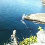 Cape Flattery Trail Foto