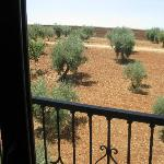 Olive grove outside our room