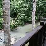 my balcony - I had a macaque scurry down the tree opposite, and hornbills tapping on the window