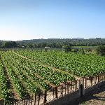 View over Vineyard