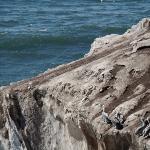 das Kliff, wo die Pelikane sich ausruhen