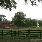 The farm, windmill and planting area