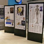 Part of the Tim Burton Exhibition