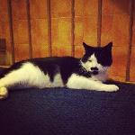 Charlie Chaplin the cat