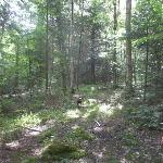 Hiking trail by far campsites
