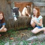 These sweet mini horses were right behind our cabin...so fun!