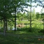 View of the pond from our site