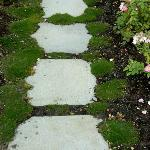 Moss-lined and rose edged path from the patio
