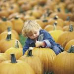 Acres of pumpkins and family fun!