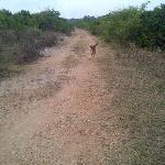 simba, the lodge dog, always willing to accompany me on a walk