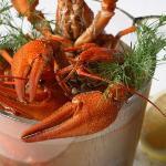 Volga crayfish