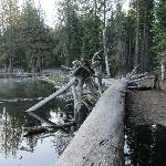 evening view of fallen trees on the lake - 1 minute walk from our cabin