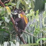 Sad Black Monkey