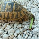 watching tortoise each breakfast as I eat mine