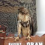 Bird at the restaurant entrance