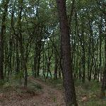 The woods on the property