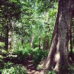 Gorgeous hiking trails!