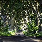 The Dark Hedges lane - just trees....