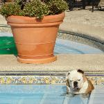 Molly in Pool