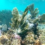 Beautiful coral!