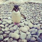 Ricky the Rockhopper Penguin.