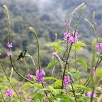 Hummingbirds in the back garde
