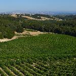 vineyard and the valley