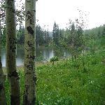 Aspens near Dog Lake in summer