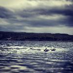 Dolphins in Loch Scavaig