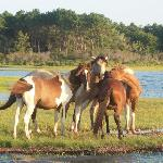Saltwater Pony Tours