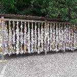 寒川神社の写真その3