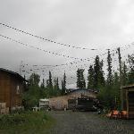 Buckshot Betty's - yard area by cabins