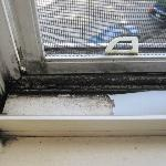 Mold in windows. Wow!