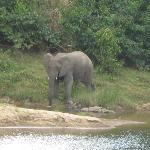 Elephant viewed from the lodge at Tongole