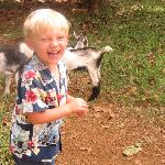 My son loved the baby goats