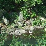 Ducks by the stream