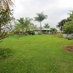 Island Goode from yard