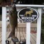 Smallmouth Bass caught off dock