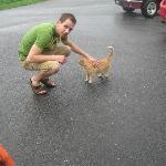 Foxy the cat