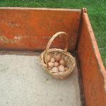 Fresh Eggs the kids collected
