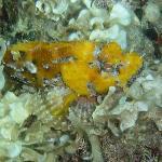 Foto di Sardinia Divers