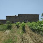 The villa and vineyard