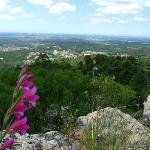 Blick im Bucaco Nationalpark