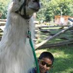 My son with his llama Woody